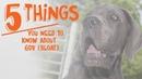 5 вещей, которые нужно знать о вздутии желудка у собак / 5 Things You Need to Know About Bloat GDV in Dogs
