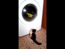 В первый раз видит как стирается машинка