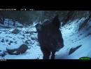Tejon boar investigates camera