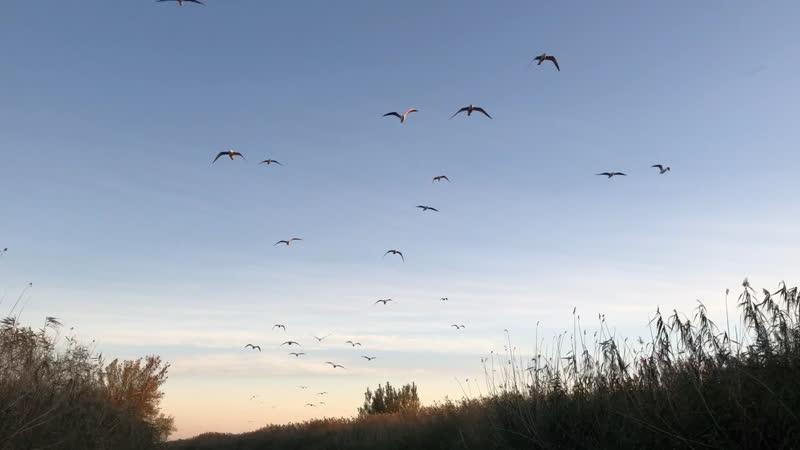 Чайки Астрахань
