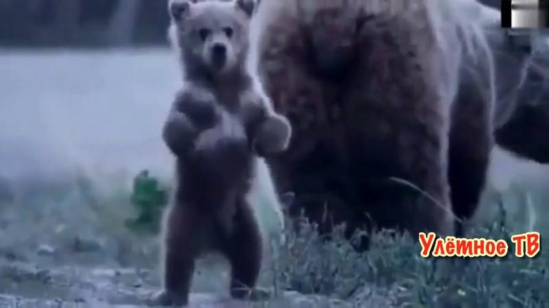 🔞ПРИКОЛЫ С МЕДВЕДЯМИ 2018. ТАКОЕ ВОЗМОЖНО ТОЛЬКО В РОССИИ! Реакция людей при встрече с медведем! 2