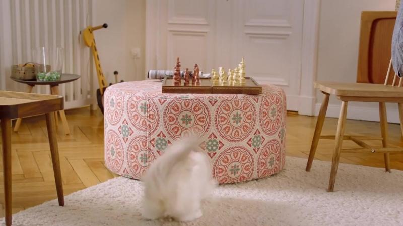 Нужен даже кошке Дальномер BOSCH Zamo II