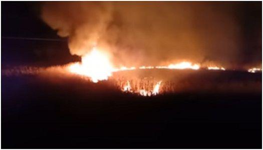 В районе Горловского моря загорелись камыши: видео