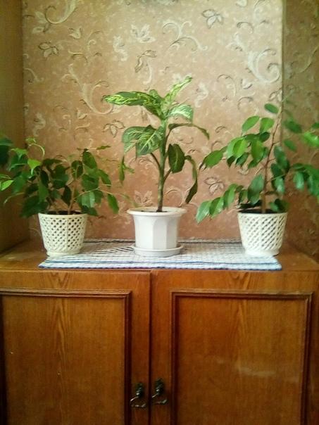 Продам 3 цветка