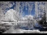 Tombe la neige - SALVATORE ADAMO
