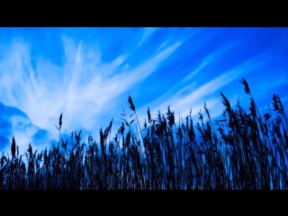 ЛЮБЭ Луговая трава