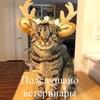 Подслушано ветеринар