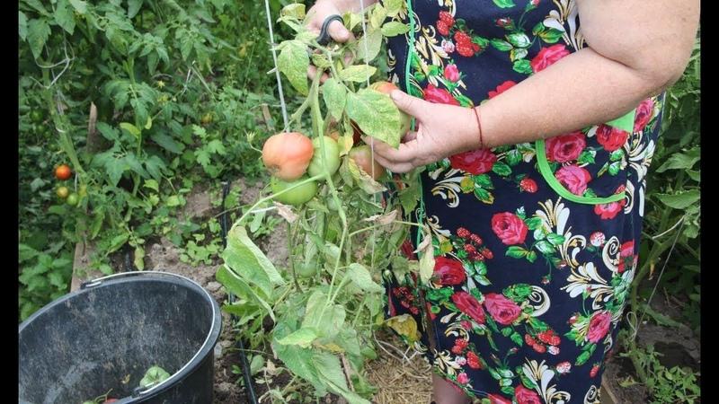 Во саду ли в огороде • Потеряете Урожай, Если Не Будете Действовать! Решительные Меры.