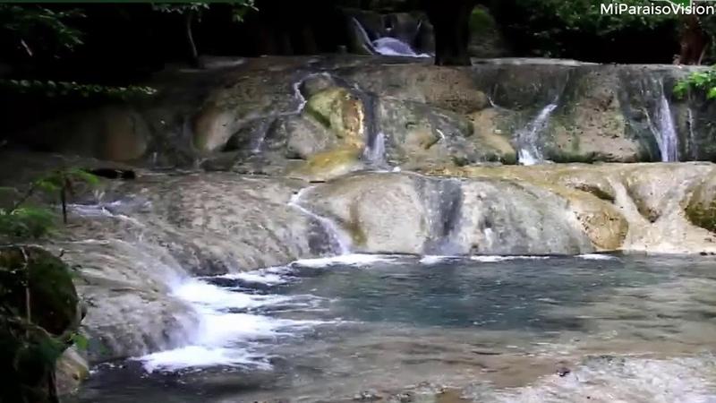Relajante Sonido de Agua y Pajaros-Estudiar-Dormir Meditar-Sonidos del Bosque-Rainforest Sounds 057