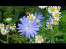 релакс Шопен красивая, успокаивающая музыка 240 X 426 .mp4
