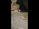 Slippery Steps on the Thames River __ ViralHog