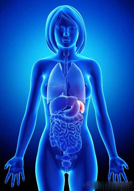 Гепатоспленомегалия, состояние, тесно связанное с гепатомегалией, возникает, когда печень и селезенка одновременно увеличиваются