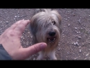 Пёс Тотоша-дурилка, а папа-дразнилка или наоборот