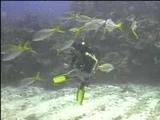 Kelly Monaco - Scuba diving