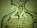 Строение и функции лимфатической системы mp4