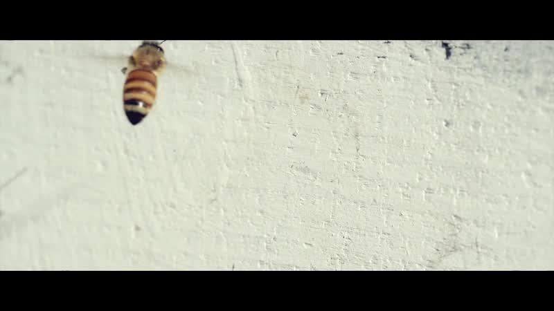 На старт. Внимание. Пчелы!
