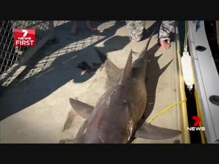 Акула запрыгнула в лодку.