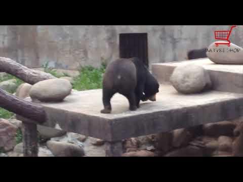 Как бесплатно пройти в зоопарк ШанхайHow to go for free to the Shanghai Zoo (подписывайтесь на канал мечта 200 подписчиков!!1)