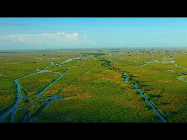 How a Giant Lazy River of Grass Became the Everglades