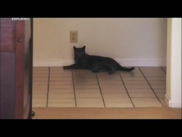 Моя адская кошка. Безумный Макс.