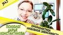 📺 Выпуск 43 Профилактика любовной зависимости Упражнение Психолог Дарья Константинова