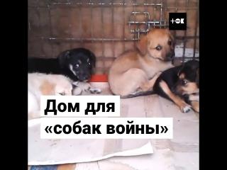 Приют «Четыре лапки» в Донецке