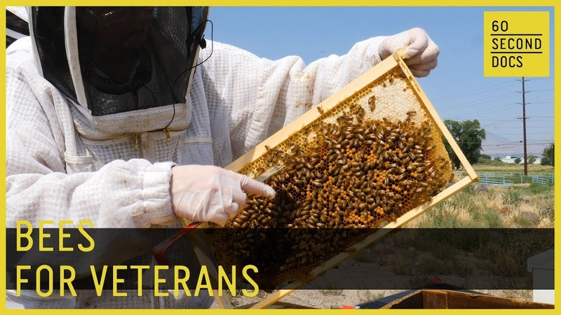 How Bees Help Veterans Heal 60 Second Docs
