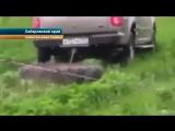 Уполномоченный представитель губернатора Хабаровского края уничтожает чужой урожай клубники!