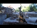 Прикольные медведи. Калининградский зоопарк. Funny bears-zoopark-plat-scscscrp