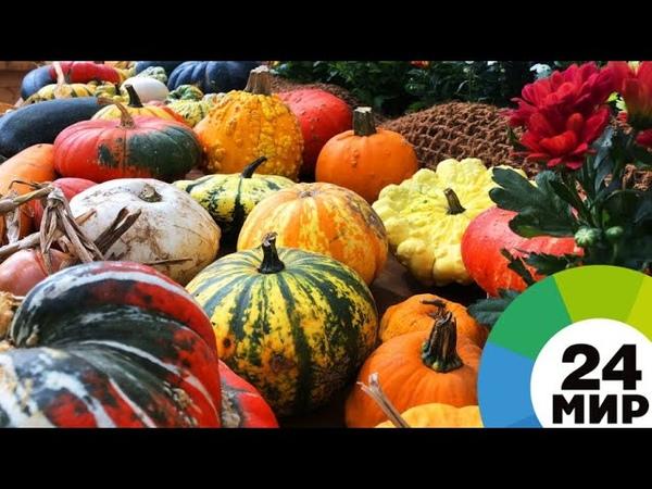 «Мир! Труд! Урожай!»: в Москве показали все многообразие садов и огородов - МИР 24