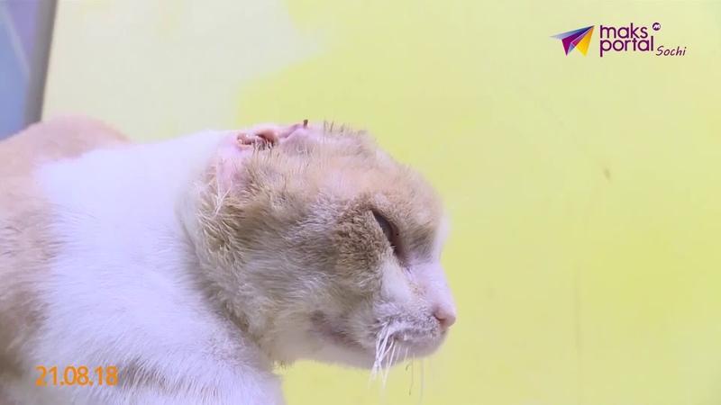 Человеческая жестокость издевательства над животными участились