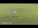 Basic Agility Soccer drill Football Drills - The Forward Backward Drill