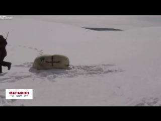 Британская БК разрисовала русского полярного медведя в рамках рекламной кампании