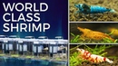 Keeping Award Winning Shrimp International Shrimp Contest