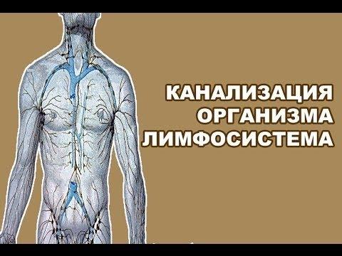 ***Лимфатическая Система и Её Очистка***|***Limfaticheskaja Sistema i Ejo Ochistka***
