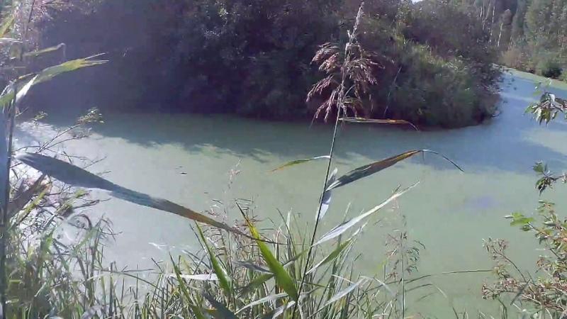 Охота на утку со спрингером, подача с воды