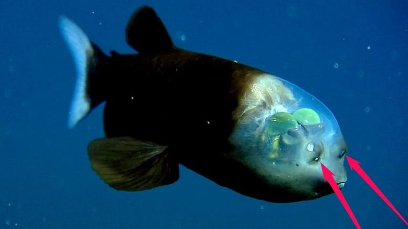 Рыба от которой люди обомлели и перекрестились увидев её голову [Кот Тимка]