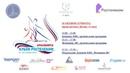 Кубок России Ростелеком 3 этап Девушки Женщины произвольная программа