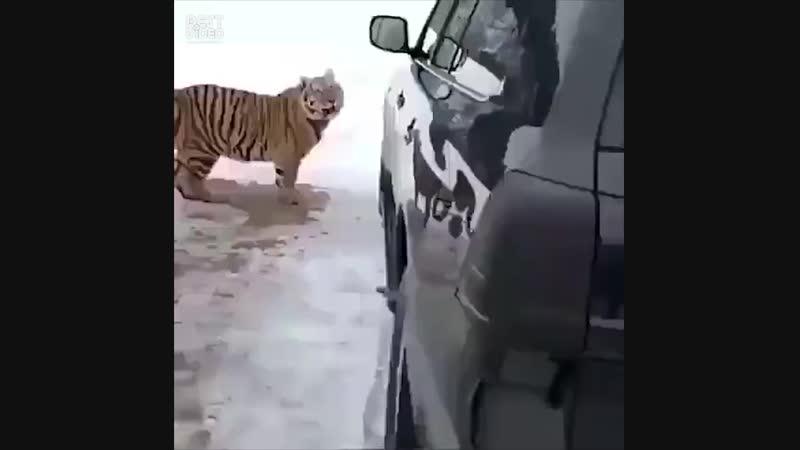 Извините, у меня там игрушка, я поиграюсь?