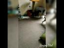 Video_Zip_20170524_172311.mp4