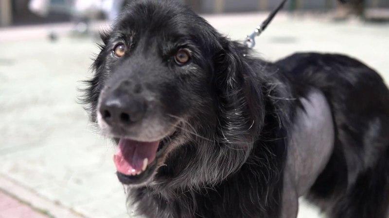 Хирургическое лечение собаки с заворотом доли легкого