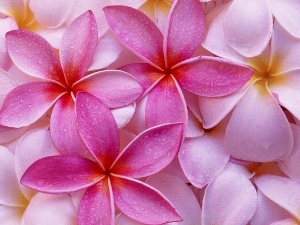Дыхание весны - День 6. Елена Ходинецкая. Цветы из силикона