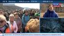 Новости на Россия 24 Дальневосточных леопардов защитит экологический тоннель