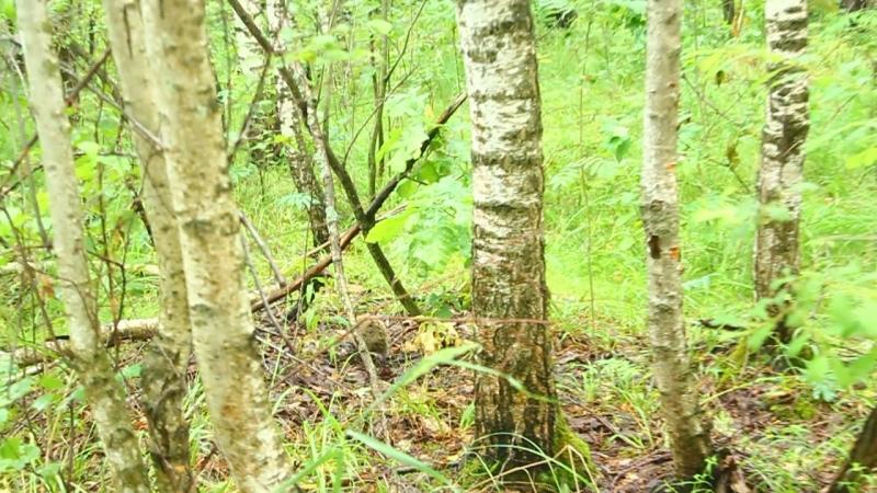 Пошла в лес по грибы, а там такое чудо ( ^^)