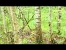 Пошла в лес по грибы, а там такое чудо  ( ^___^)