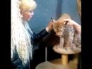 В гостях у большой кошки