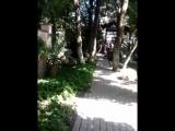 ,,Старый парк,, в Кабардинке 1