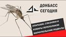 Опарыши слизняки и комары переполнили мариупольские подвалы