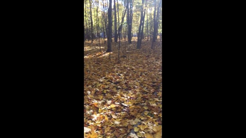 Золотая осень филевский парк 16 октября