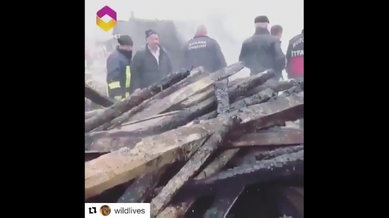 Theellenshow Repost @wildlives ・・・ Love is everything when his house burned to the ground he made sure to save his biggest treas
